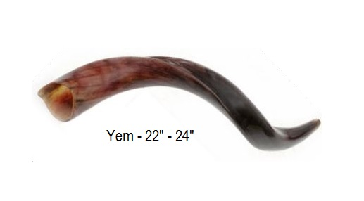 shofar_yemenite_22-24